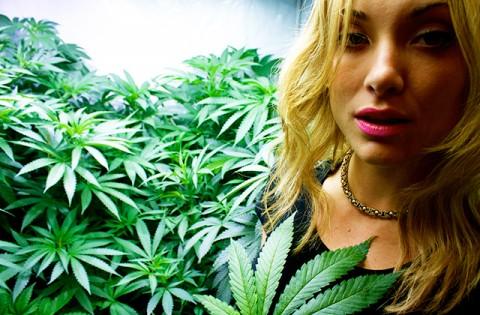 Wat is het verschil tussen stoned en high?