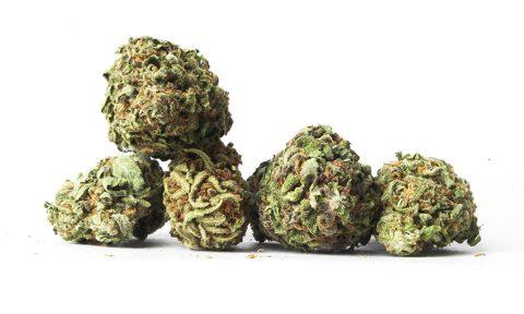 Verontreinigde cannabis