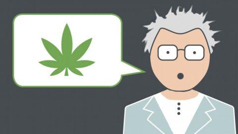 Angst is de rem op legalisatie