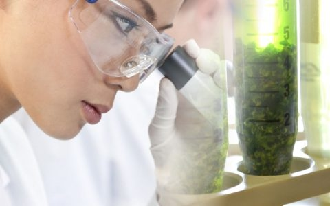Cannabis testen of niet?