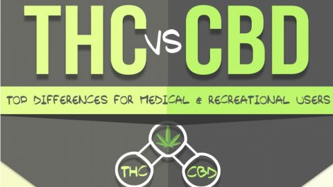 Infographic CBD versus THC